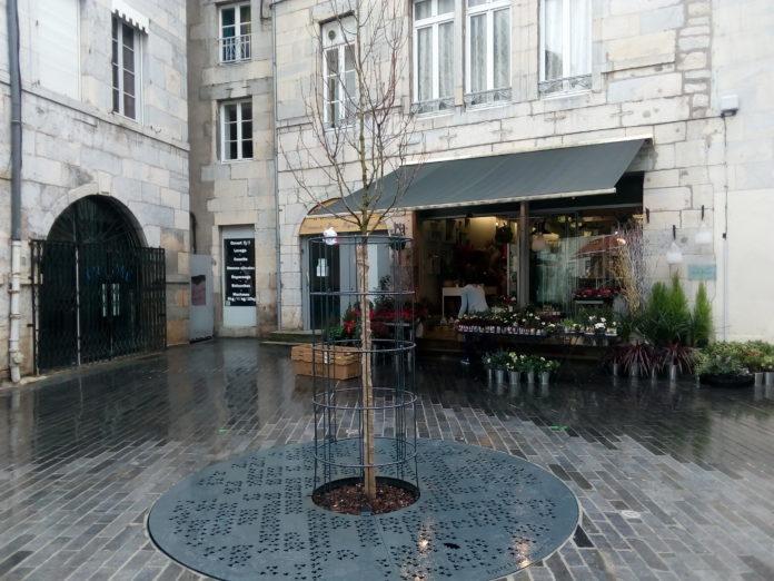 Magnolia place Pasteur